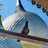 Голубь - священная птица..... :: Galina Leskova
