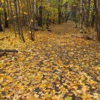 IMG_2435 - Осень,  что ли? :: Андрей Лукьянов