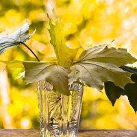 Листья желтые ... :: Ольга Винницкая