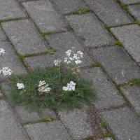 городские цветы :: ник. петрович земцов