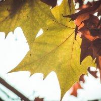 Я люблю тебя, осень... :: Маргарита Б.