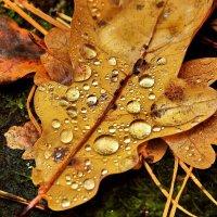 Листвой опав отплачет осень... :: Лесо-Вед (Баранов)