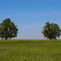 Дерева. :: Танюша Коc