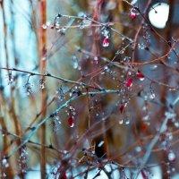 дождь :: Анастасия Nast