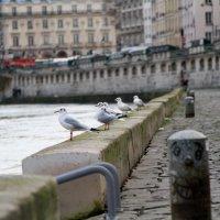 вот такая зима в Париже. :: Ksenya Smirnova