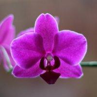 Орхидея в фас и в профиль))) :: Марина Жилина