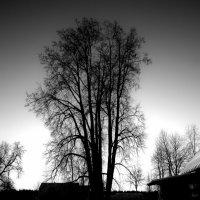 Ксения Крылова - Зима