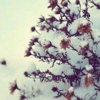 Цветочки :: Zlata Tsyganok