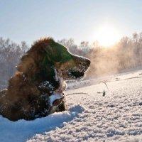 Божественная собака! :: Дмитрий Ценгуев
