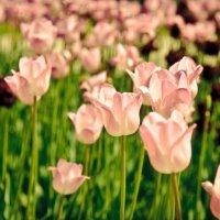 Flowers :: Никита Пшеничников