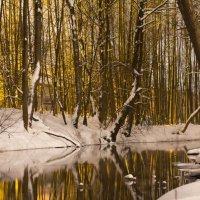 зимняя прогулка :: Дмитрий Ховрин