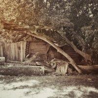old_barn :: Irina (Azur) Kulakova