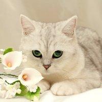 Зеленые глазки))) :: Татьяна Tati