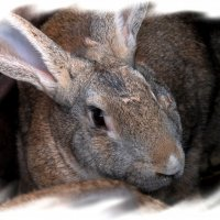 Братец-кролик :: Валентин Родоманов