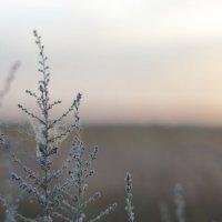 Природа :: Valentin Dobrosmyslov
