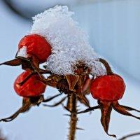 Замороженный шиповник :: Владимир Орлов
