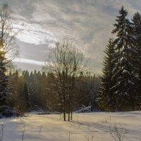 В лесу :: Aleksey Donskov