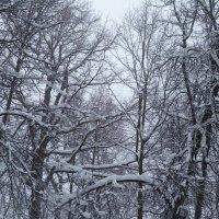 зимний лес :: Инга Егорцева