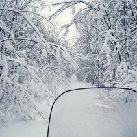 В лесу :: Илья Покровский