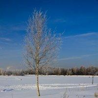 Пейзаж :: Виталий Острецов