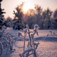 Зимний день :: Игорь Хохлов