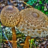 Веселые грибочки :: Дмитрий Симонов