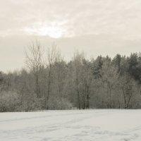 Лес :: Сергей Баландин