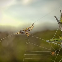 spider love :: Mari Na