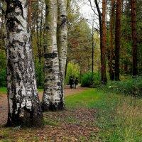 В парке :: Leonid Volodko