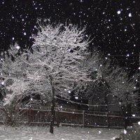 Первый снег :: Liubov Garkusha