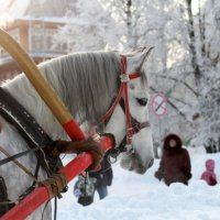 Однажды в студеную зимнюю пору... :: Татьяна Линенко
