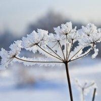 Январь :: Виталий Острецов