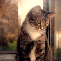 Кошка :: Victoria Lugovaya