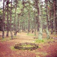 Танцующий лес :: Victoria Lugovaya