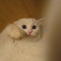 Белая горячка) :: Leila Dank