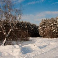Зимний лес :: Дмитрий Долгов