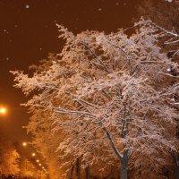 Зимняя дорога :: Наталья Наталья
