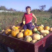 Урожай :: Андрей Буртовой