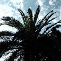 Под пальмой :: Маргарита Савинова