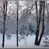 В декабре, в декабре все деревья в серебре... :: Ольга Гавриленко