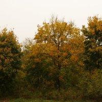 осень :: Вера Иванова