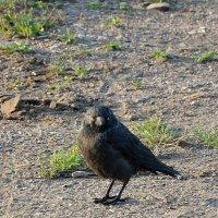 Очень серьезная птица :: Валерий Небесский