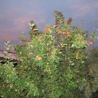 Вечером в саду.... :: Валентина Хазова