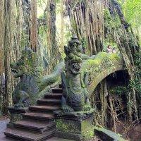 остров бали индонезия, лес обезьян :: валерий телепов