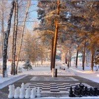 Сыграем в шахматы? :: Ольга Гавриленко