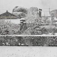 белым-бело :: Надежда Карасева