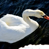 Птицы :: Павел Сущёнок