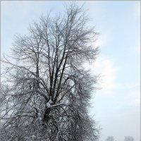зима :: Мария **********