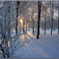 Чародейкою Зимою Околдован, лес стоит... :: Ольга Гавриленко