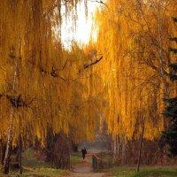 Краски старого парка. :: Marina Kutsenko